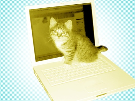 cat-laptop